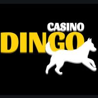 dingo casino test